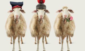 Non le solite pecore. Non i soliti formaggi