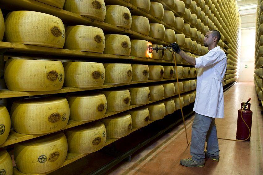 Parmigiano Reggiano - marchiatura a fuoco CGu picc