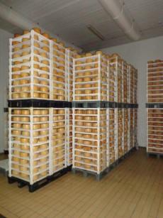 Le griglie di polipropilene IFT sono ideali per salagione, asciugatura e stagionatura di pecorini, caprini, caciotte, tomini eccetera