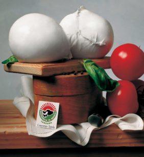 Immagine Cortesia: Consorzio della mozzarella di bufala campana Dop